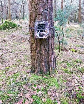 camera-trap-1