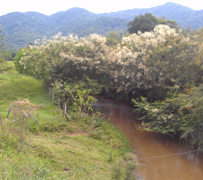 fig-5-clean-camboriu-river-entering-floodplain.jpg
