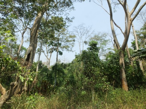Well-wooded farmland (John Mallord)